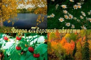 Флора Тверской области