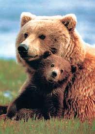 Символ человеческой души - медведь