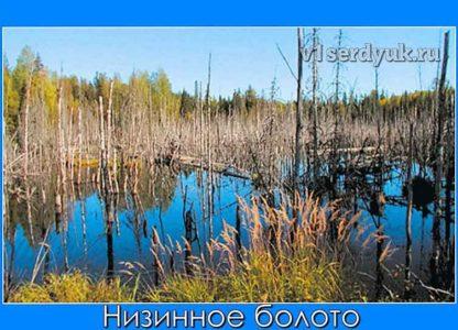 Поверхность_низинного_болота