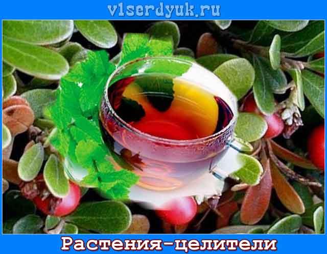 Лечебные_растения_и_травы